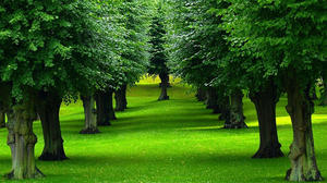 Trees! – A vision of efficient Management Empire